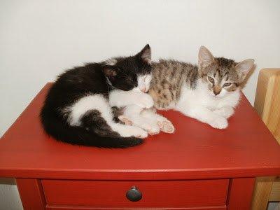 60. Feline update